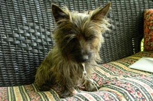 JuneBug, my mama's puppy