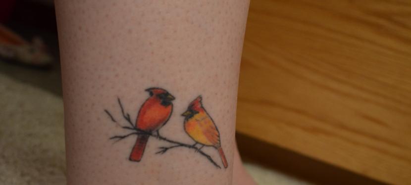 Cardinals and RedSox
